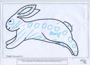 Rabbit 534
